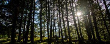 intérêt acheter une forêt